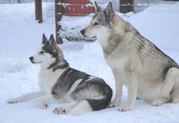 Luna & Belle Starr